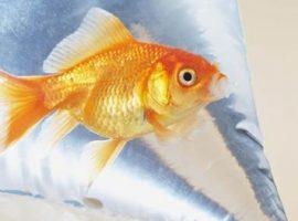 Aquarium vissen verhuizen