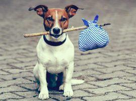 Hond-verhuizen