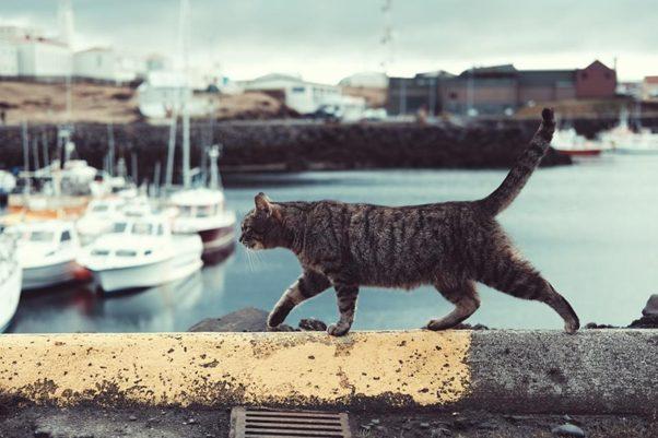Kat verhuizen naar buiten