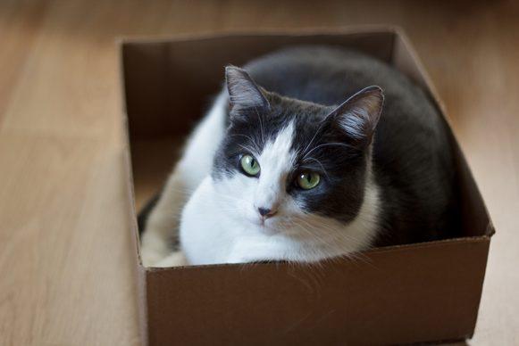 Kat verhuizen